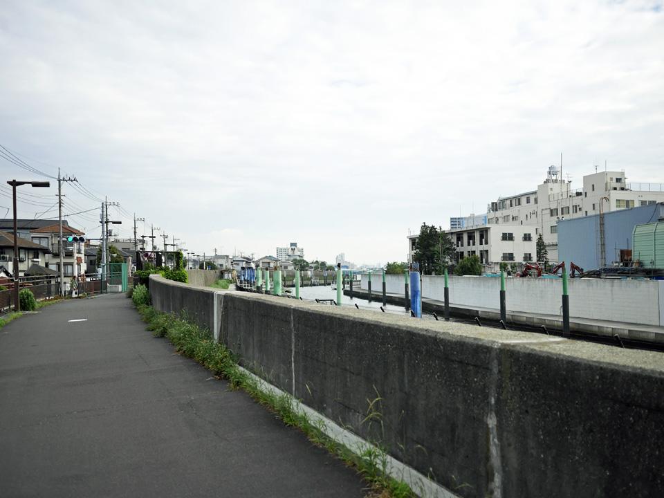 カミソリ堤防に囲まれた旧江戸川の右岸を遡上