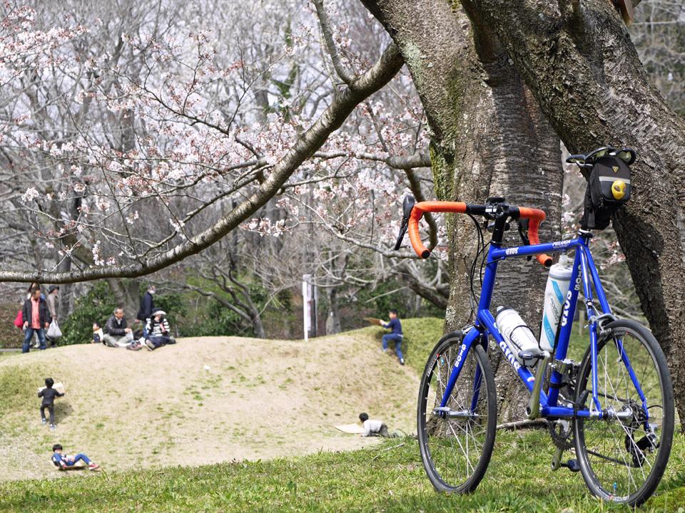 佐倉城址公園の桜に寄り添うGIOS FELUCA