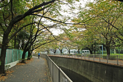 和泉から永福は木々が豊かです