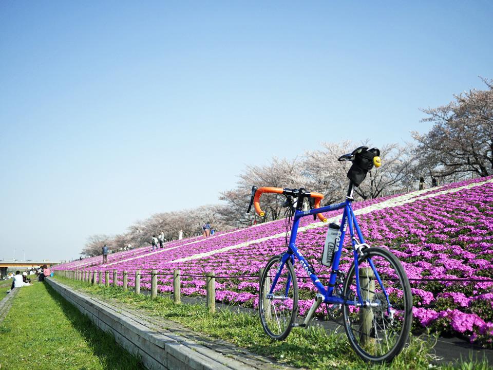 荒川赤羽桜緑地の桜並木と芝桜と GIOS FELUCA と