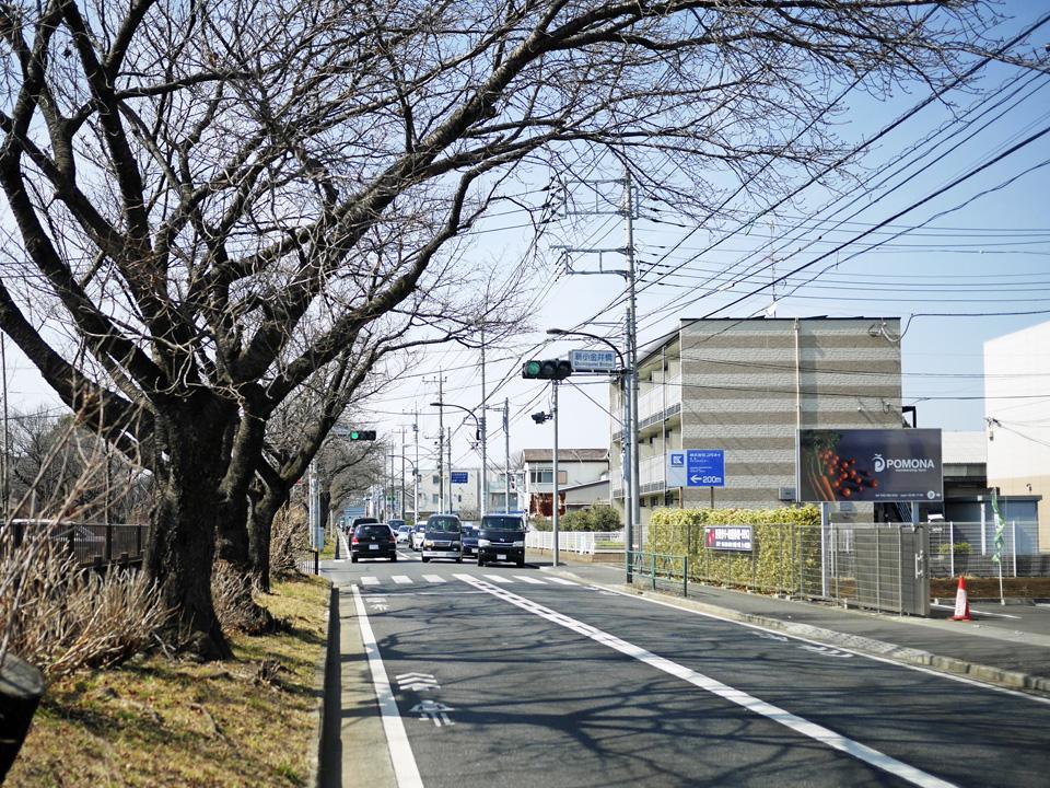 小金井公園付近は玉川上水に沿って桜並木が続く