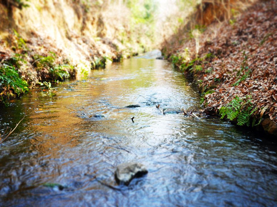 小平監視所の上水小橋から放流される玉川上水