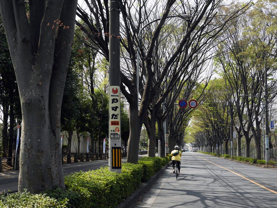 朝霞中央公園前のケヤキ並木を進む