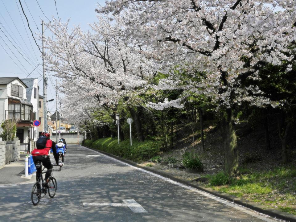 首都高をわたって高島平の桜並木の前へ