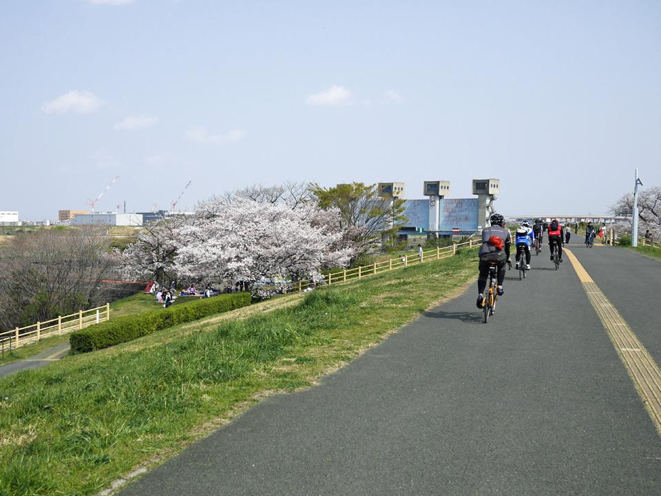 岩淵水門の付近も花見で賑わう