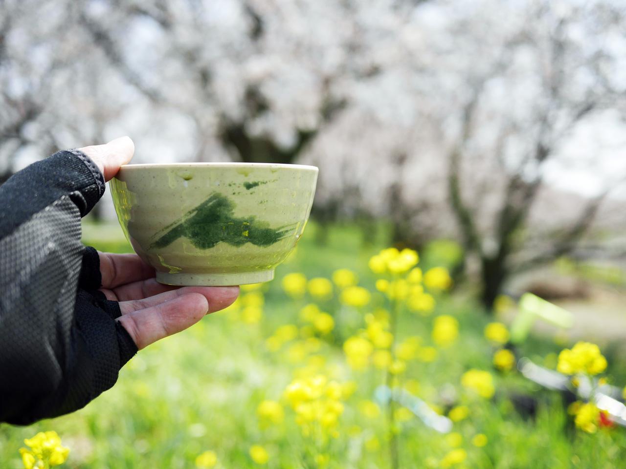 さくら堤公園の北端で桜と菜の花を愛でながら野点に興じる