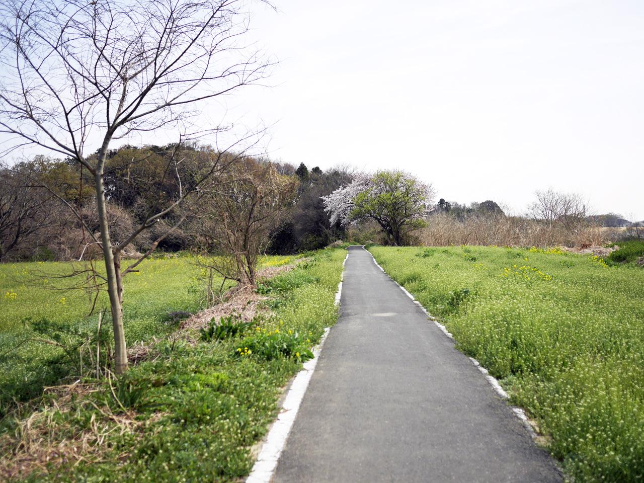 榎本牧場から県央ふれあいんぐロードで開平橋まで南下