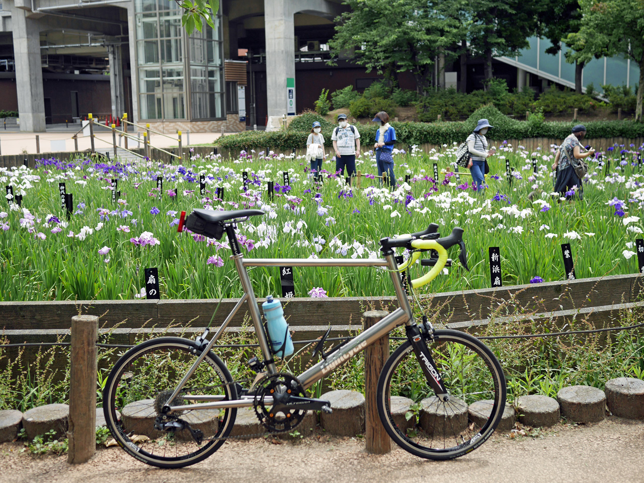 しょうぶ沼公園の花菖蒲とチタンミニベロ